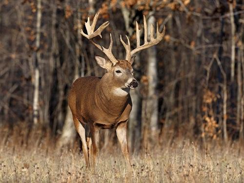 Shooters Gun Shop Deer Hunting